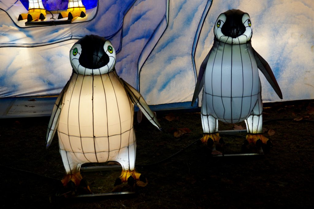 magic-lantern-festival-birmingham-penguins
