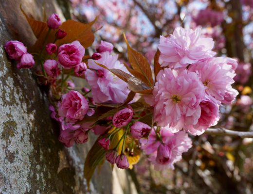 5 Happy Things - Spring Blossom