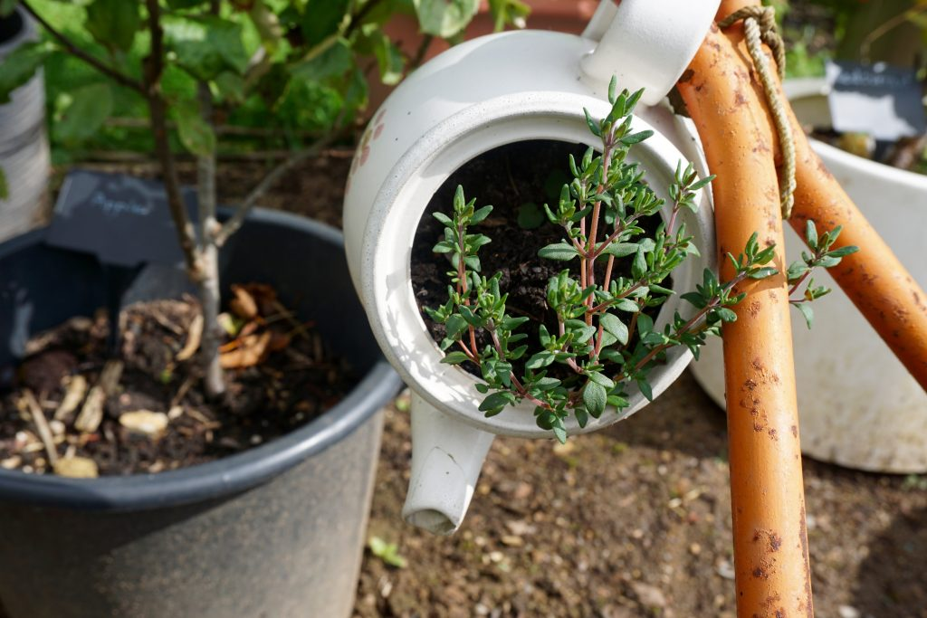 Day Out at Hughenden Manor - Teapot Thyme