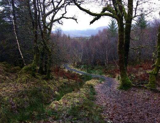 Forest Walk - Rainy Holiday in Scotland